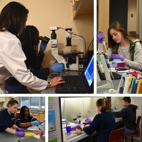 Students conducting research in BIO 111 Molecules, Cell, & Animal Physiology Lab: Cell Culture.